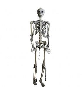 scheletro articolato, grandezza naturale