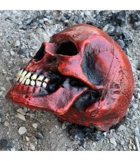 Cranio medio colore rosso